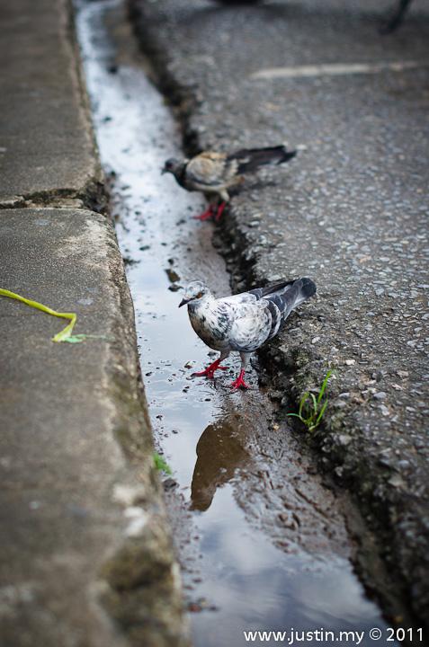 Reflected Bird